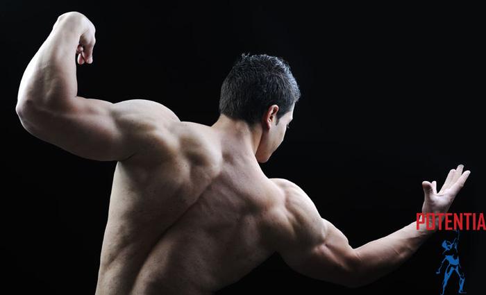 10. Potentia Physique – 6 bistvenih nasvetov za preoblikovanje telesa